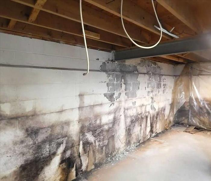 Basement Mold Damage